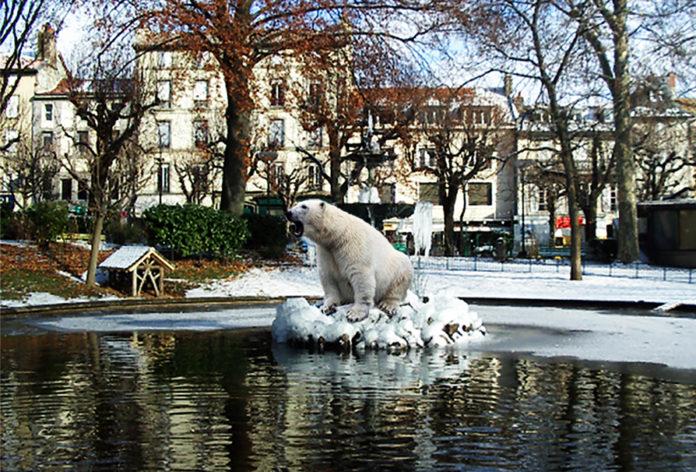 Un ours blanc au square d'Aurillac