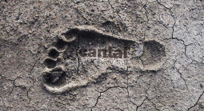 Des traces de vie découvertes en Châtaigneraie Cantalienne